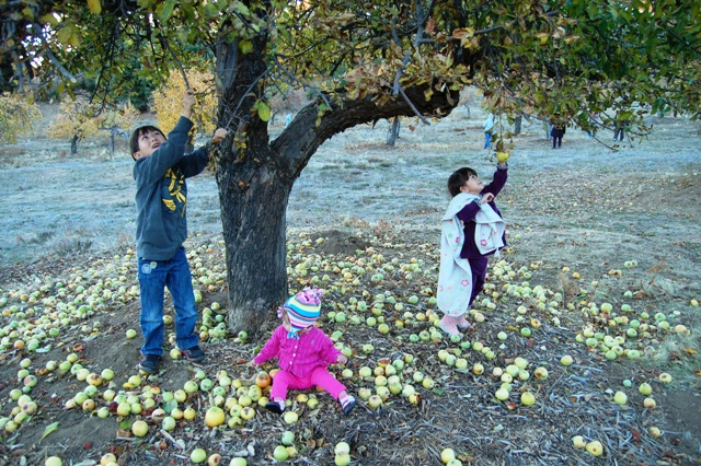 Mateo, Talia & Sarina Waite- 6th Generation under Alonzo's apple trees in fall, 2012