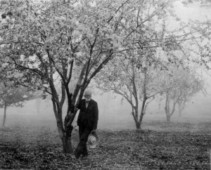 Mr. Cleaver in his orchard. Likely 1904, Robert Asher photo